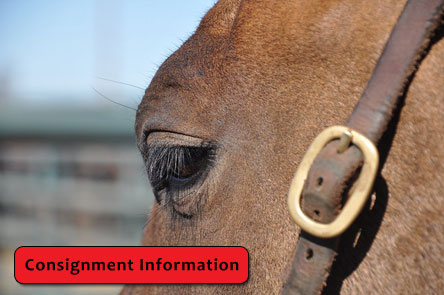 Consignment information